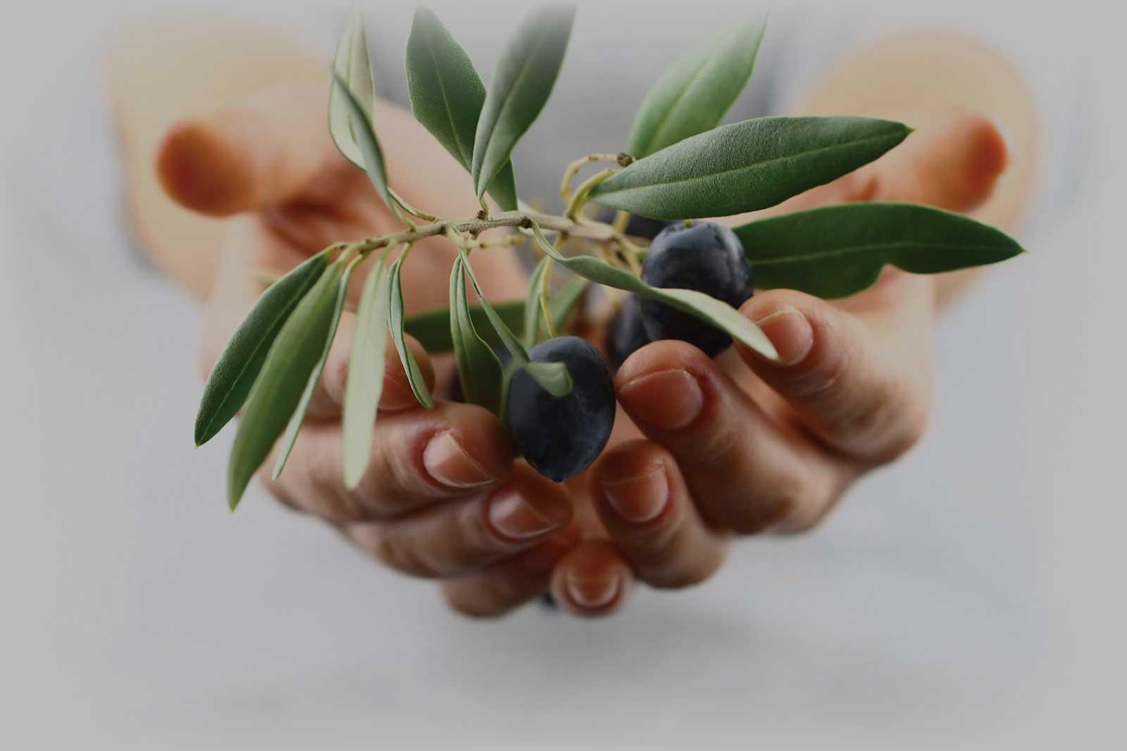 Оливковые заводы Epidavros Bekas
